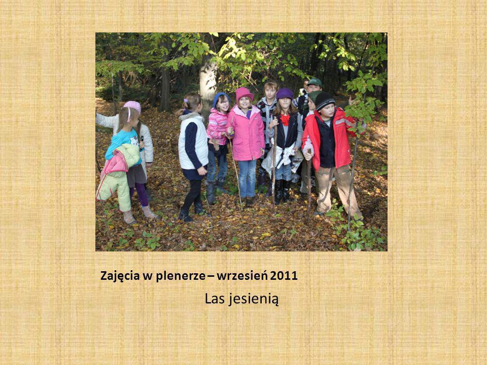 Zajęcia w plenerze – wrzesień 2011 Las jesienią
