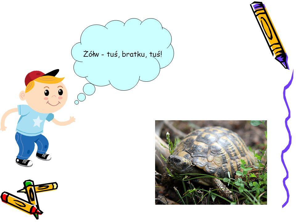 Żółw - tuś, bratku, tuś!