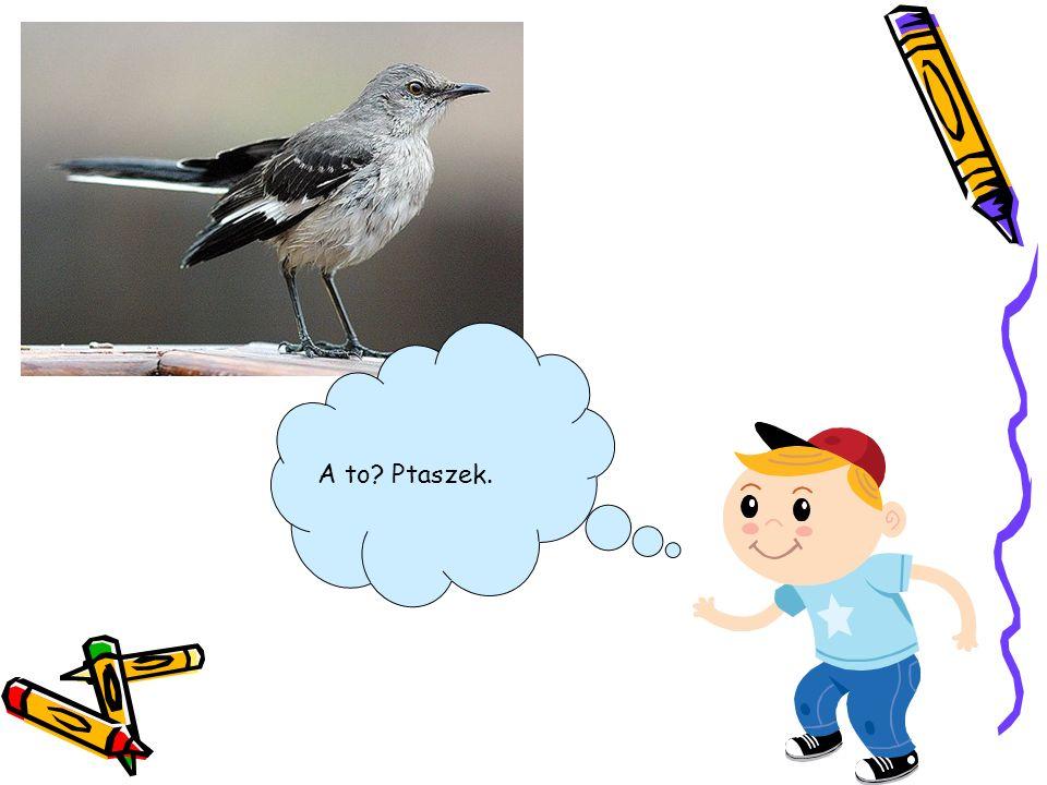 A to? Ptaszek.