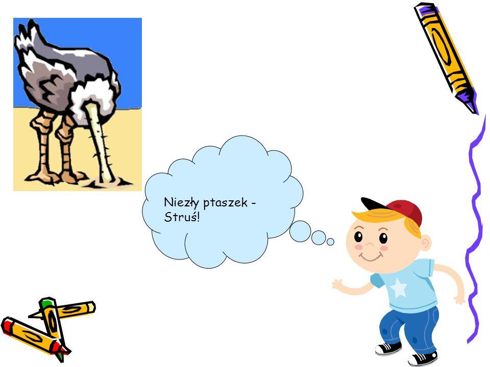 Niezły ptaszek - Struś!