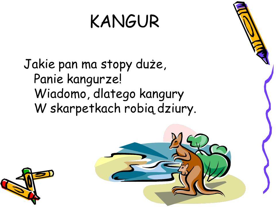 KANGUR Jakie pan ma stopy duże, Panie kangurze! Wiadomo, dlatego kangury W skarpetkach robią dziury.