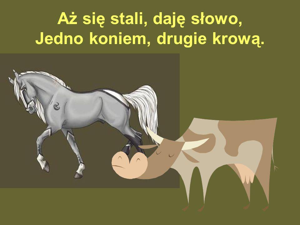 Aż się stali, daję słowo, Jedno koniem, drugie krową.
