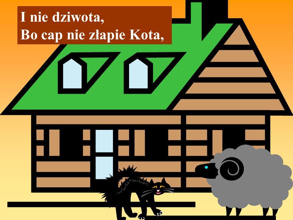I nie dziwota, Bo cap nie złapie Kota,