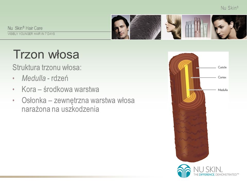 Nu Skin ® Hair Care VISIBLY YOUNGER HAIR IN 7 DAYS Nu Skin ® Trzon włosa Struktura trzonu włosa: Medulla - rdzeń Kora – środkowa warstwa Osłonka – zewnętrzna warstwa włosa narażona na uszkodzenia