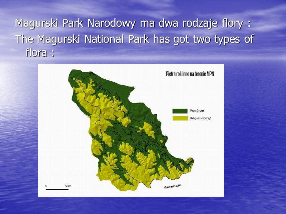 Magurski Park Narodowy ma dwa rodzaje flory : The Magurski National Park has got two types of flora :