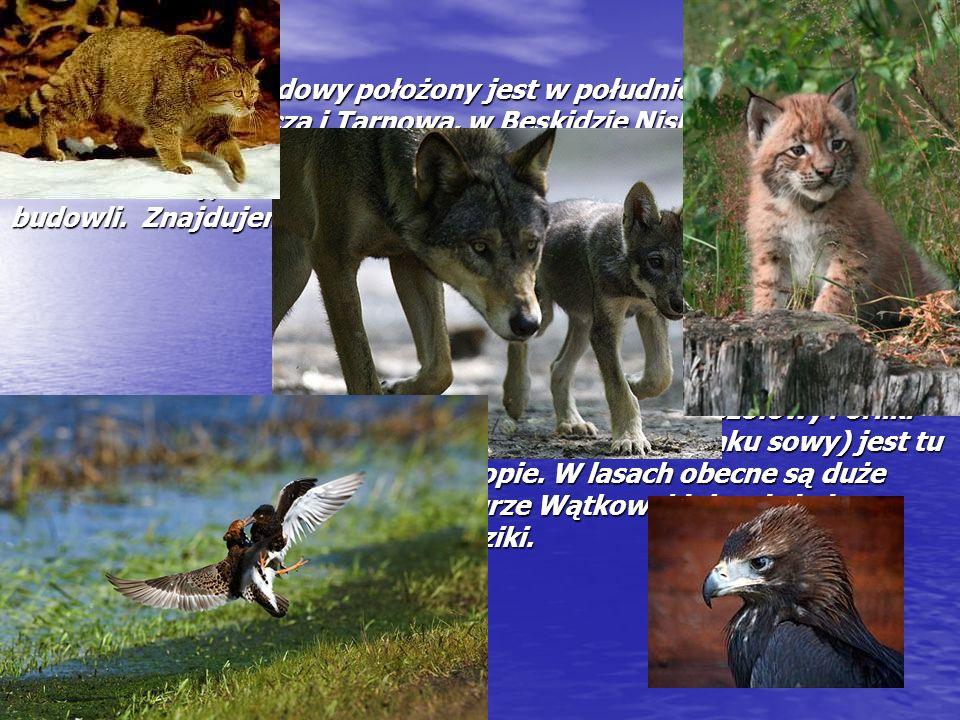 Magurski Park Narodowy położony jest w południowej Polsce, w pobliżu Nowego Sącza i Tarnowa, w Beskidzie Niskim.