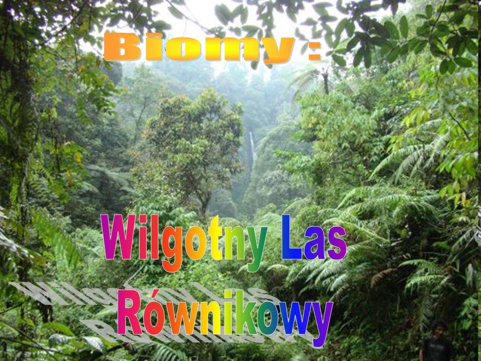Las strefy równikowej, puszcza tropikalna, las deszczowy, las tropikalny, las higromegatermiczny.
