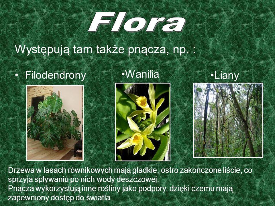 Występują tam także pnącza, np. : Filodendrony Wanilia Liany Drzewa w lasach równikowych mają gładkie, ostro zakończone liście, co sprzyja spływaniu p