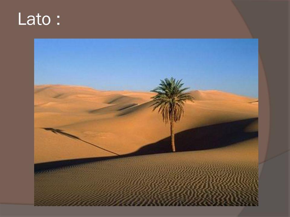 Klimat- Pustynie leżą w głębi platform kontynentalnych, w ciepłej strefie klimatu umiarkowanego, mającego charakter skrajnie kontynentalny.