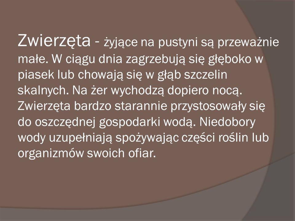 Zima: