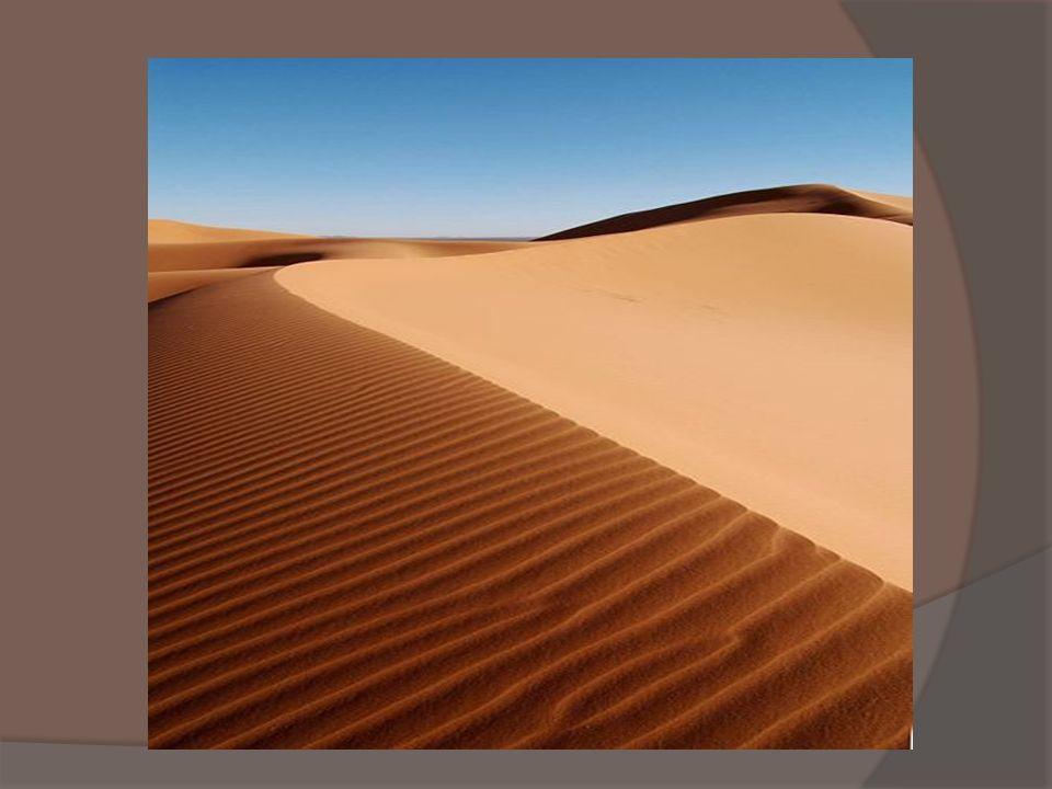 Zwierzęta - żyjące na pustyni są przeważnie małe.