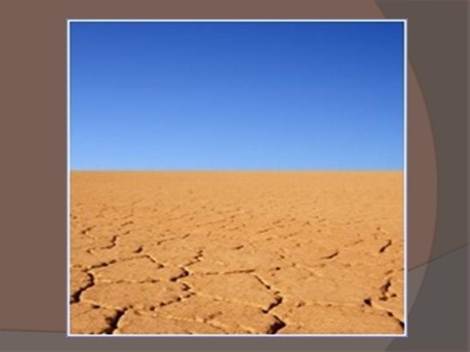 Gleby - pustyń są prymitywnego małej zawartości materii organicznej na skutek braku roślinności, często praktycznie pozbawione próchnicy i edafonu, martwe.