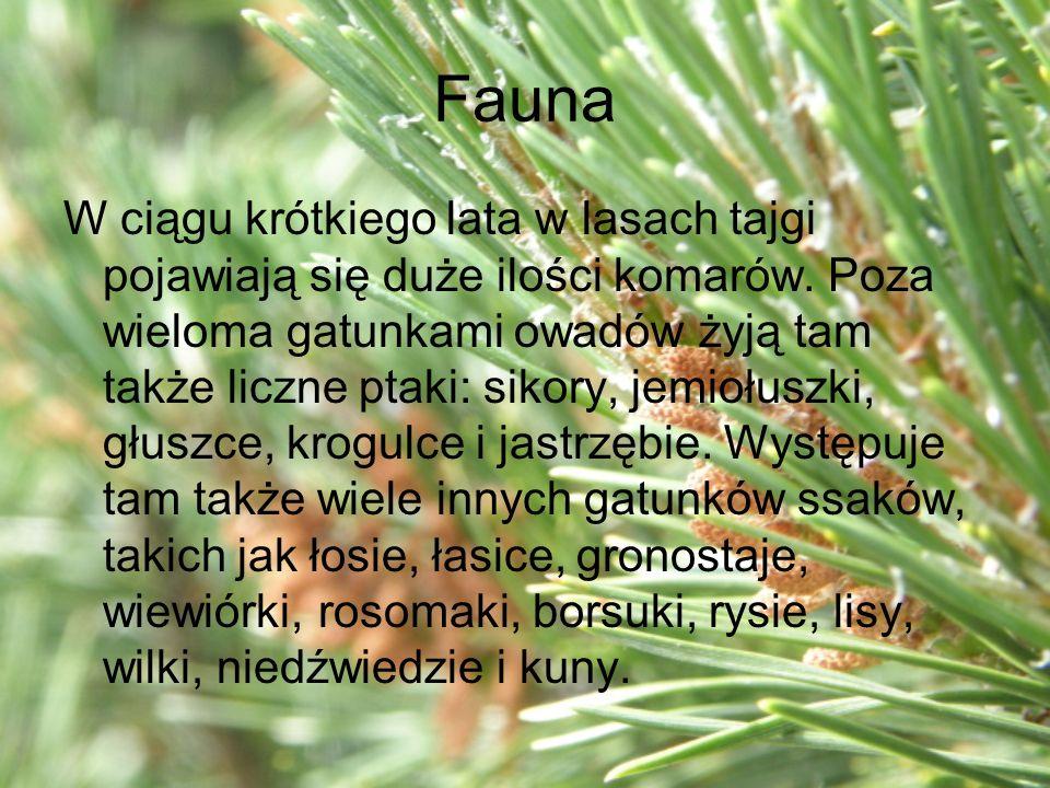 Fauna W ciągu krótkiego lata w lasach tajgi pojawiają się duże ilości komarów. Poza wieloma gatunkami owadów żyją tam także liczne ptaki: sikory, jemi