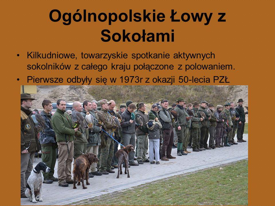 Ogólnopolskie Łowy z Sokołami Kilkudniowe, towarzyskie spotkanie aktywnych sokolników z całego kraju połączone z polowaniem. Pierwsze odbyły się w 197