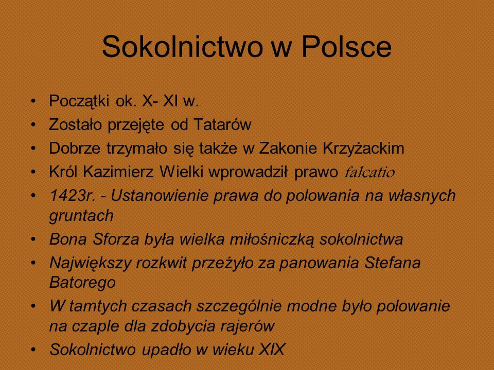 Sokolnictwo w Polsce Początki ok. X- XI w. Zostało przejęte od Tatarów Dobrze trzymało się także w Zakonie Krzyżackim Król Kazimierz Wielki wprowadził