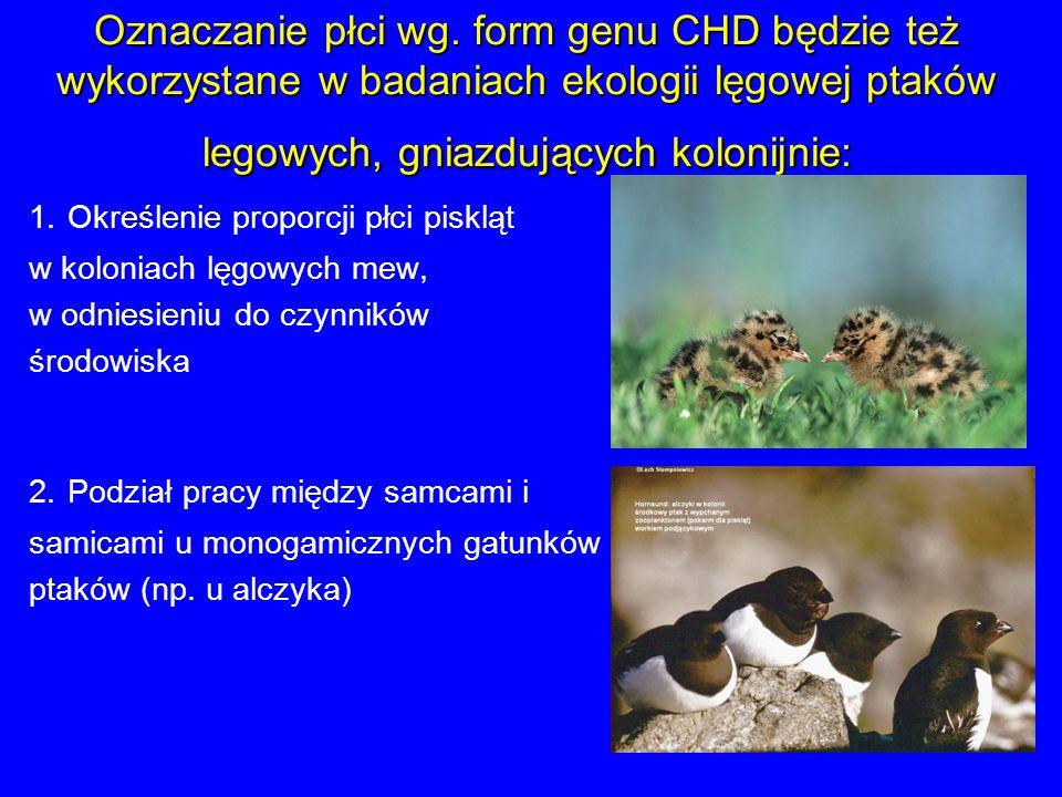 Oznaczanie płci wg. form genu CHD będzie też wykorzystane w badaniach ekologii lęgowej ptaków legowych, gniazdujących kolonijnie: 2. Podział pracy mię