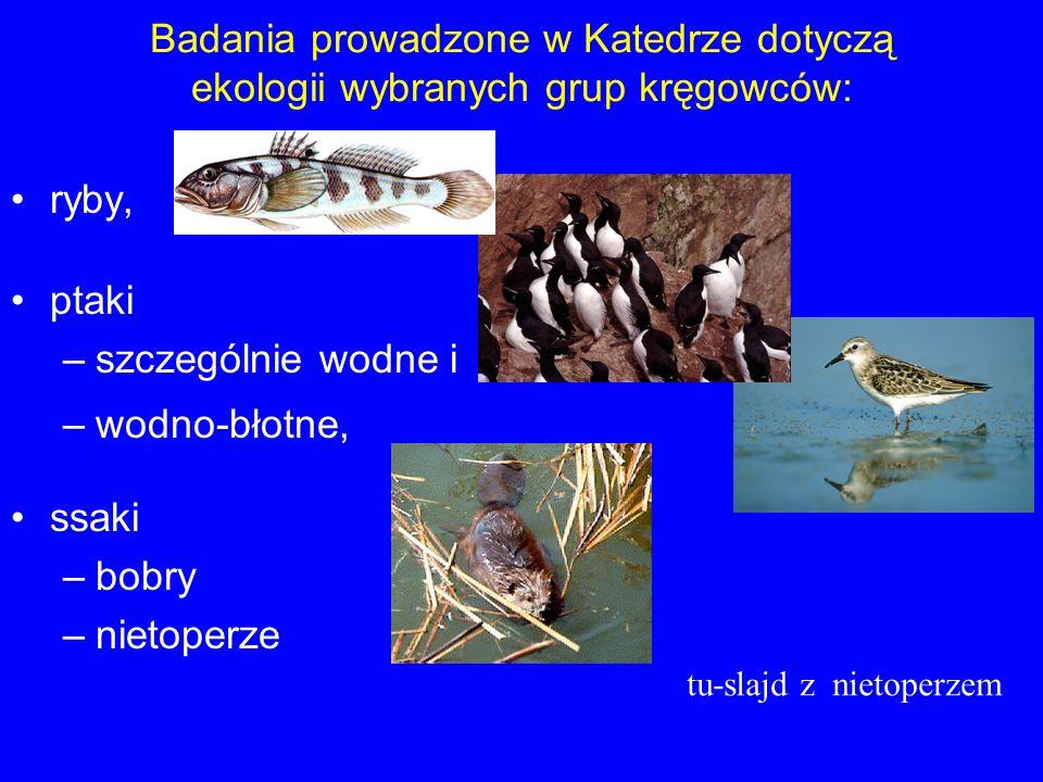 Badania prowadzone w Katedrze dotyczą ekologii wybranych grup kręgowców: ryby, ptaki –szczególnie wodne i –wodno-błotne, ssaki –bobry –nietoperze tu-s