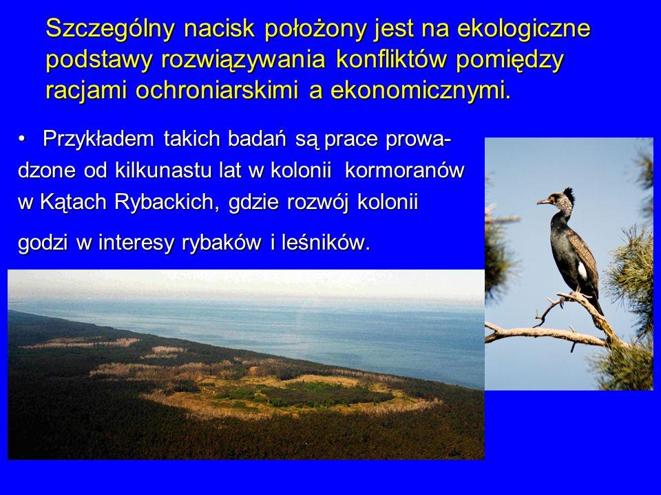 Przykładem takich badań są prace prowa-Przykładem takich badań są prace prowa- dzone od kilkunastu lat w kolonii kormoranów w Kątach Rybackich, gdzie
