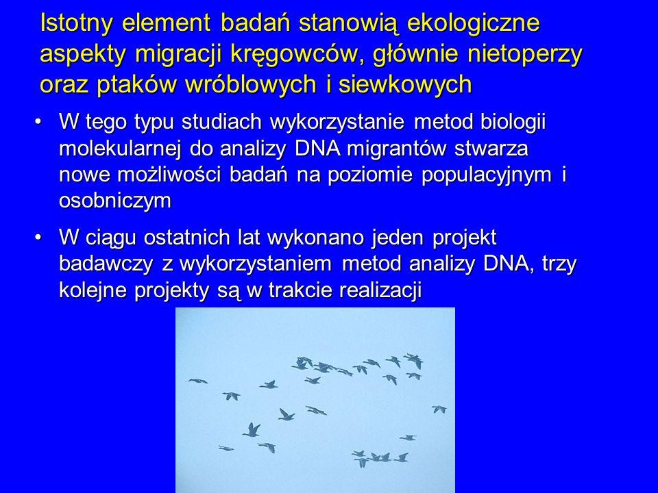 Istotny element badań stanowią ekologiczne aspekty migracji kręgowców, głównie nietoperzy oraz ptaków wróblowych i siewkowych W tego typu studiach wyk