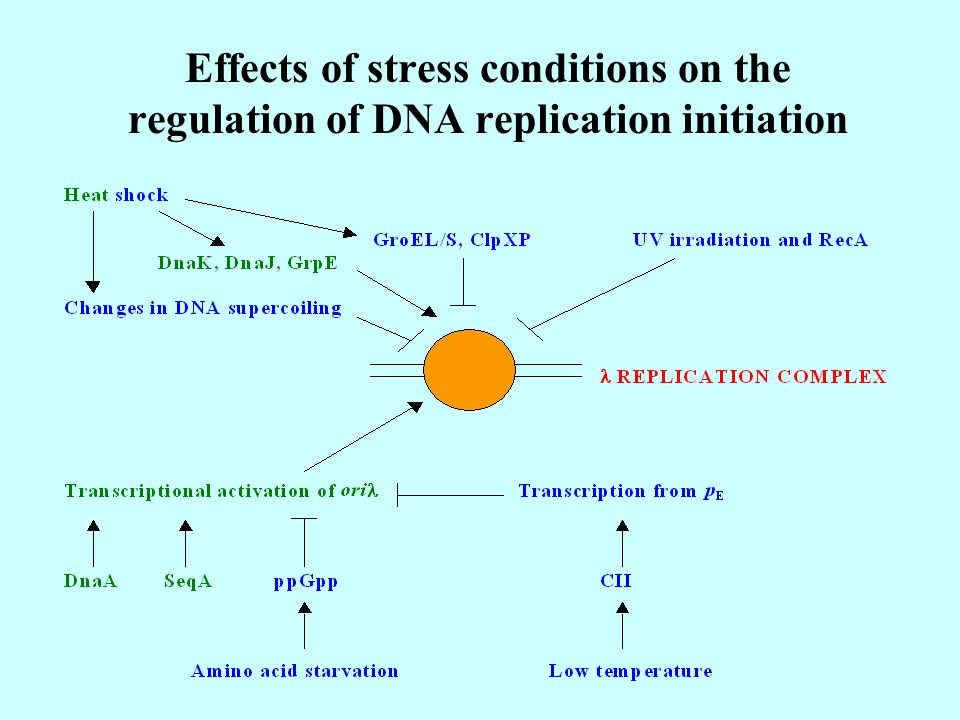 Effects of stress conditions on the regulation of DNA replication initiation