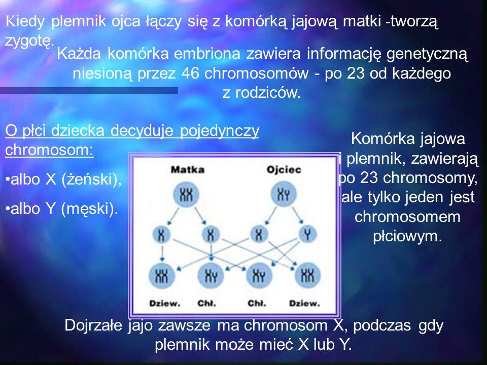 O płci dziecka decyduje pojedynczy chromosom: albo X (żeński), albo Y (męski). K iedy plemnik ojca łączy się z komórką jajową matki - tworzą zygotę. K