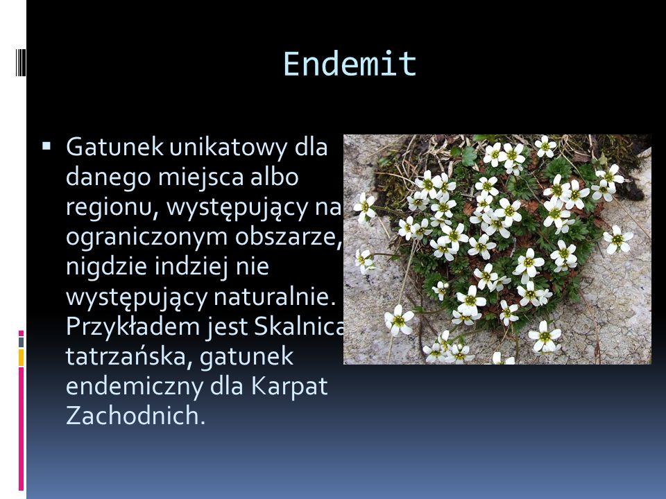 Przykłady endemitów Chryzantema Zawadzkiego Okrzyn Jeleni
