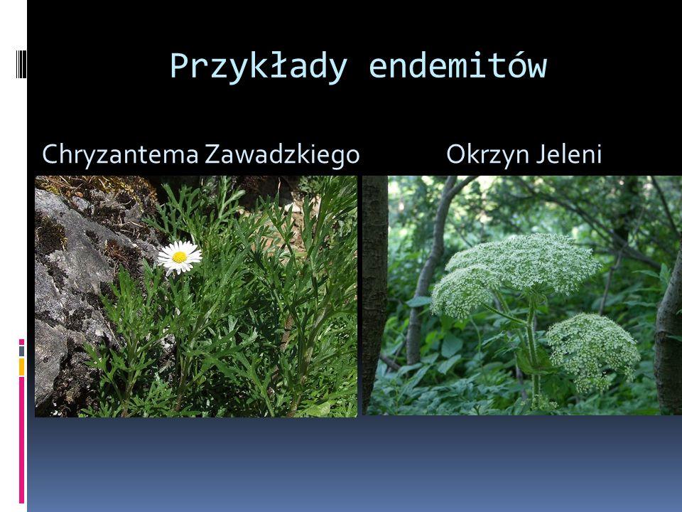 Zasięg występowania drzew Sosna Jarząb szwedzki Lipa szerokolistna Modrzew polski Buk Jodła Świerk Dąb bezszypułkowy Cis Europejski