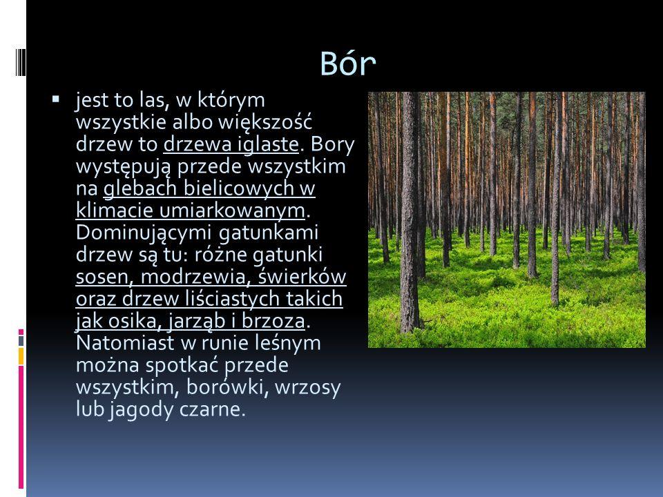 Grąd wielogatunkowy las liściasty lub mieszany z przewagą grabu i dębu, niekiedy z domieszką lipy drobnolistnej i szerokolistnej, klonu, jawora i świerku.