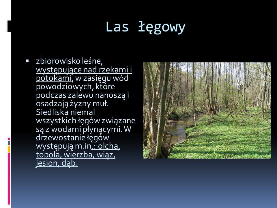 Ols las olchowy (olszowy) porastający żyzne, bagienne siedliska, o wysokim poziomie wody stojącej.