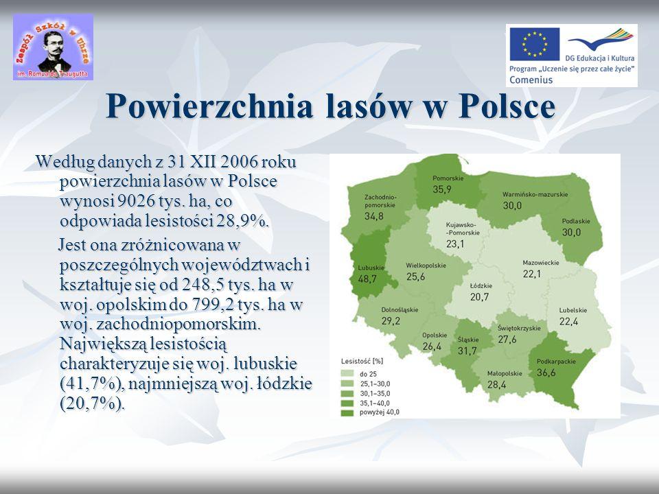 Historia lasów w Polsce X wiek XXI wiek
