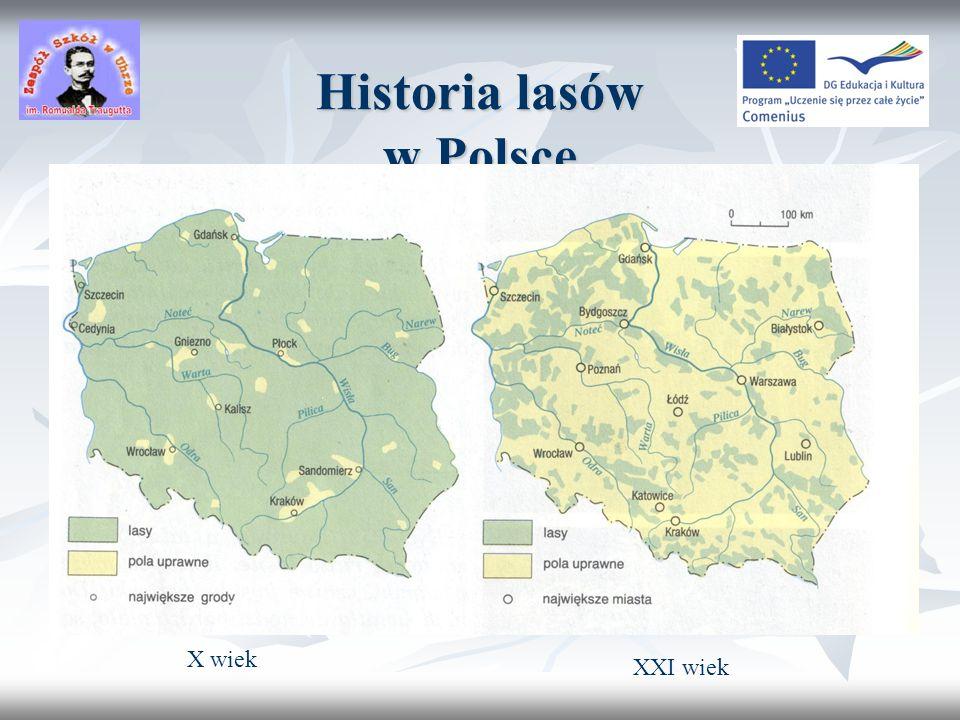 Struktura gatunkowa lasów w Polsce
