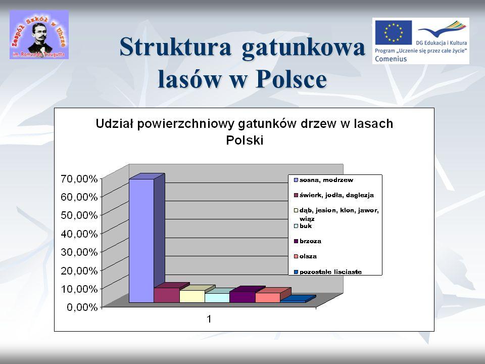 Typy zbiorowisk leśnych w Polsce Buczyna Grąd