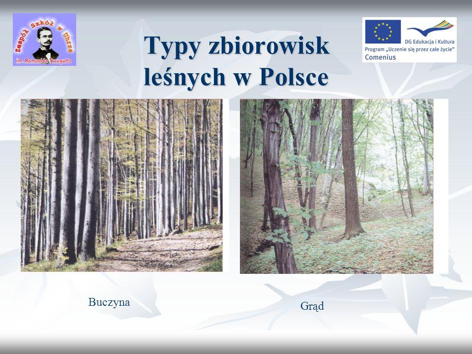 Typy zbiorowisk leśnych w Polsce Las łęgowy BórOls