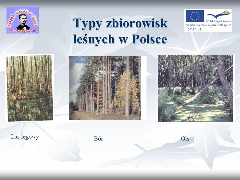 Leśne kompleksy promocyjne w Polsce