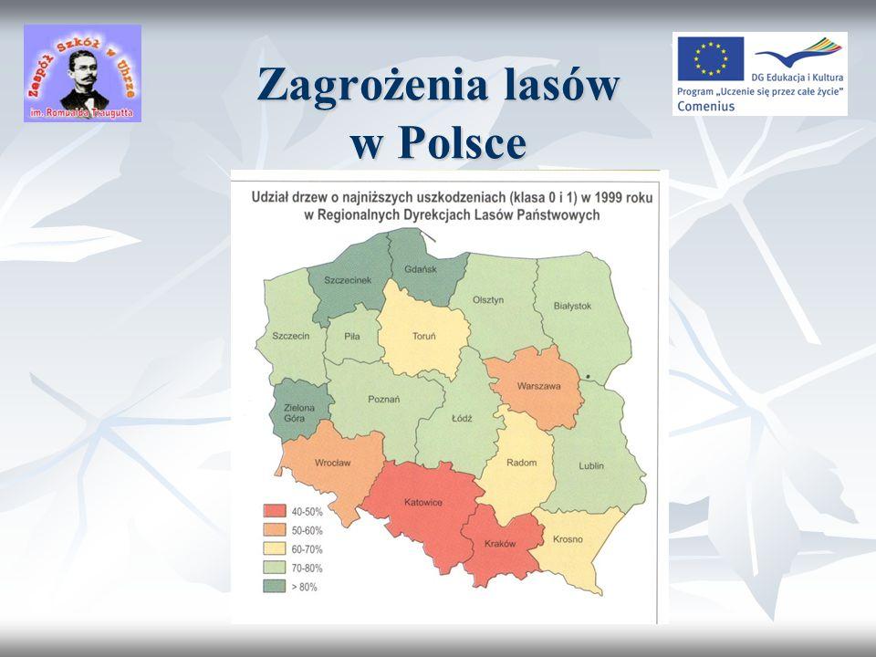 Przyszłość lasów Polski RokLesistość200628,9% 202030% 205033%