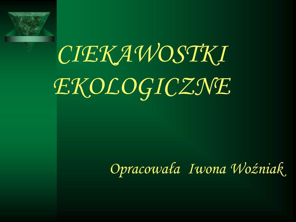 CIEKAWOSTKI EKOLOGICZNE Opracowała Iwona Woźniak