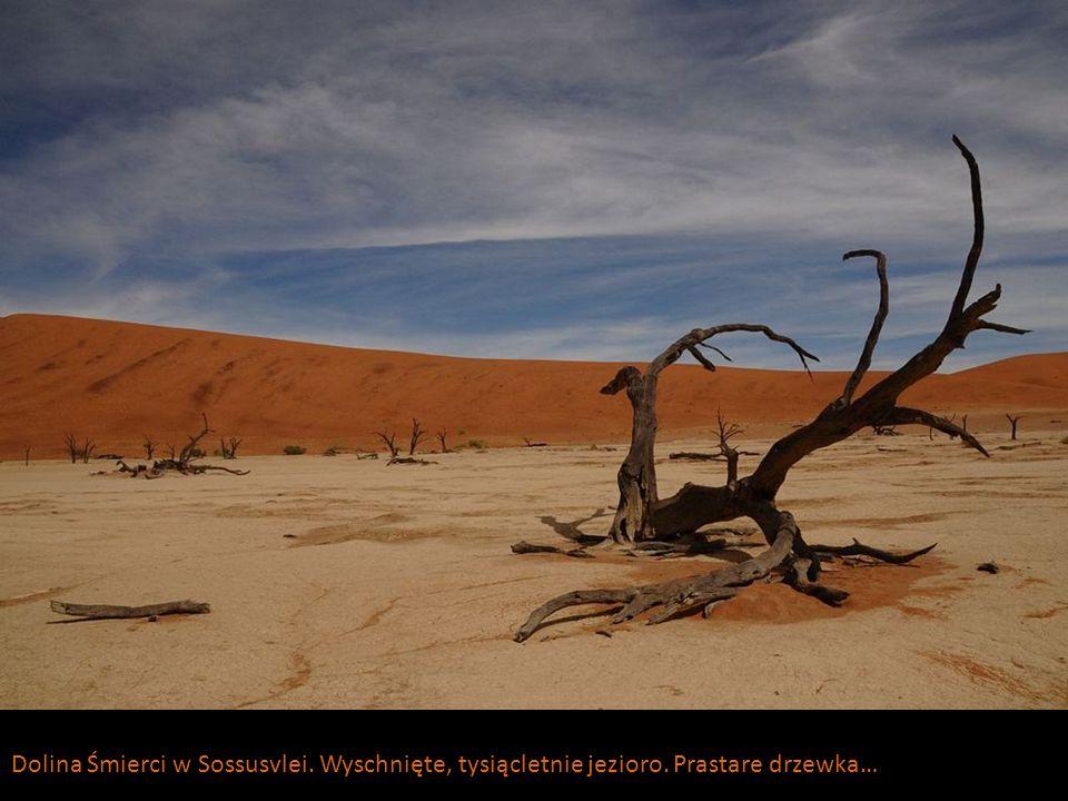 Dolina Śmierci w Sossusvlei. Wyschnięte, tysiącletnie jezioro. Prastare drzewka…