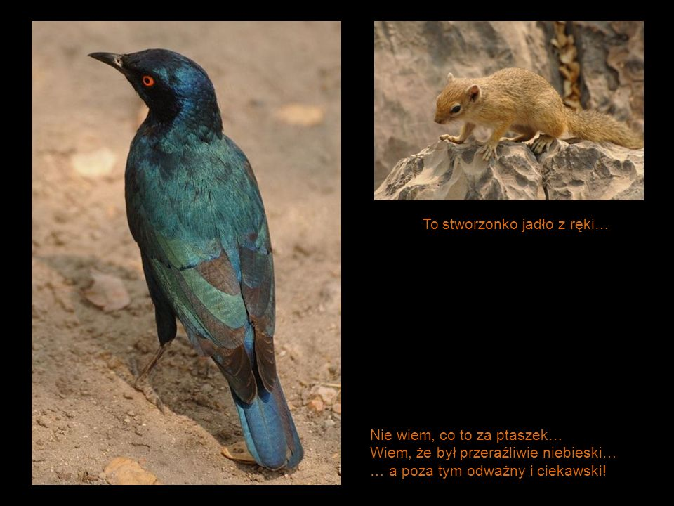 Nie wiem, co to za ptaszek… Wiem, że był przeraźliwie niebieski… … a poza tym odważny i ciekawski! To stworzonko jadło z ręki…