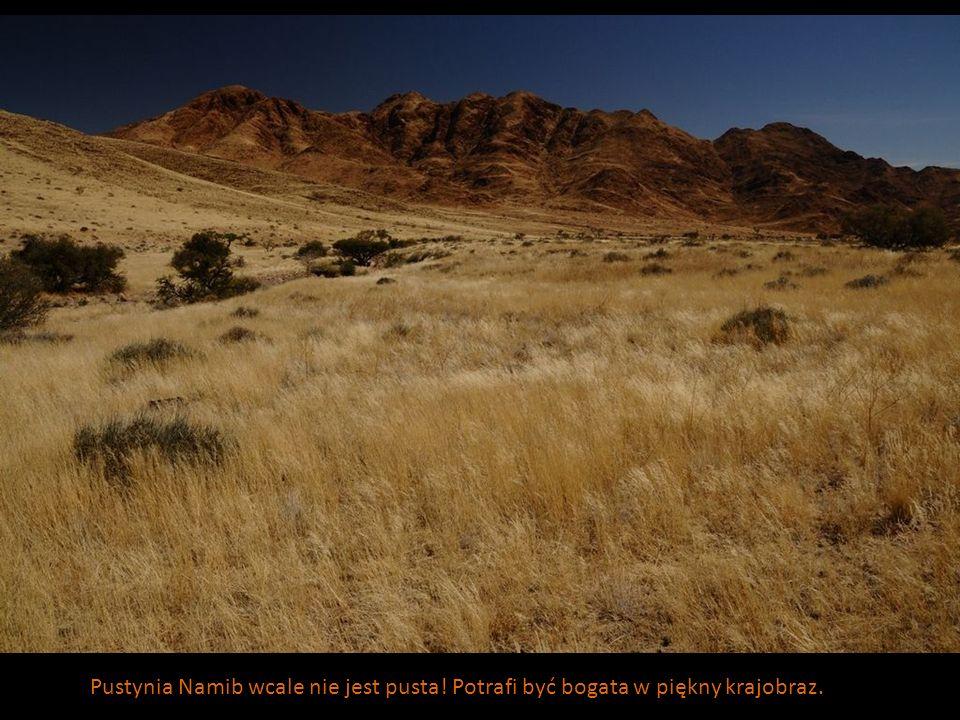 Pustynia Namib wcale nie jest pusta! Potrafi być bogata w piękny krajobraz.