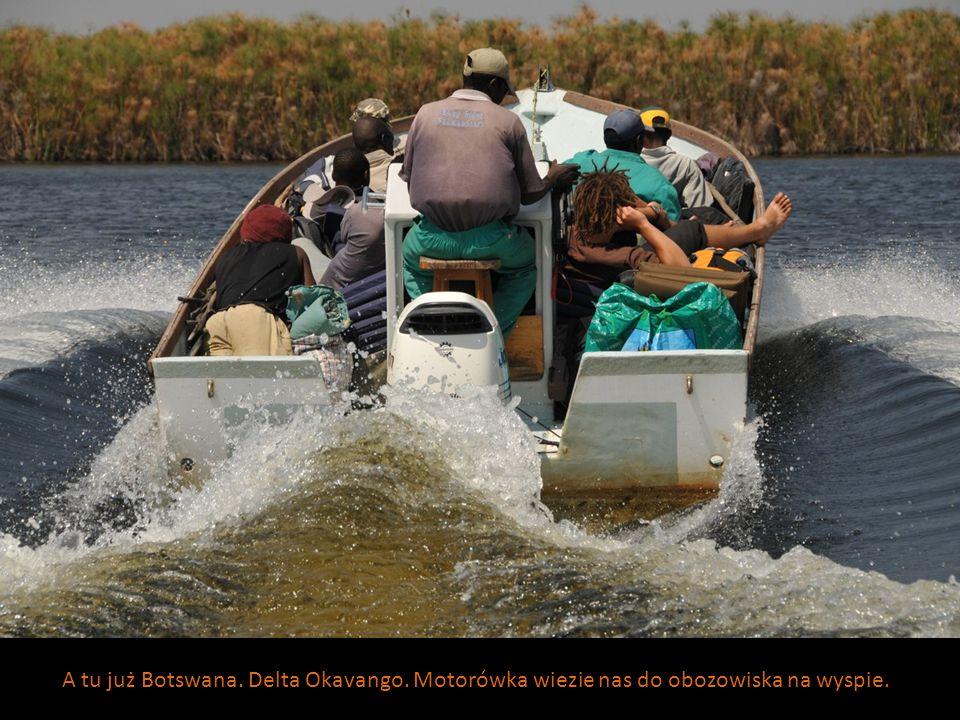 A tu już Botswana. Delta Okavango. Motorówka wiezie nas do obozowiska na wyspie.