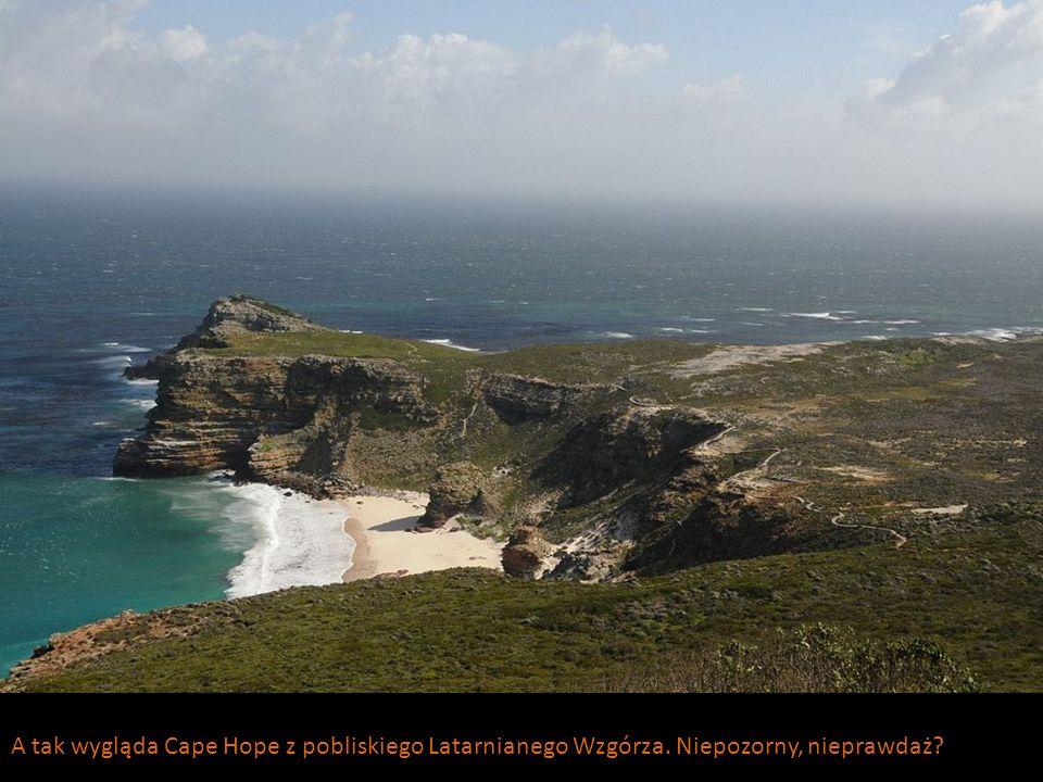 A tak wygląda Cape Hope z pobliskiego Latarnianego Wzgórza. Niepozorny, nieprawdaż?