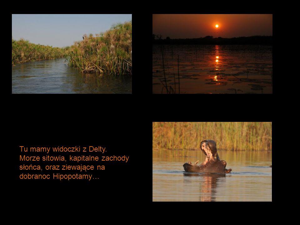 Tu mamy widoczki z Delty. Morze sitowia, kapitalne zachody słońca, oraz ziewające na dobranoc Hipopotamy…