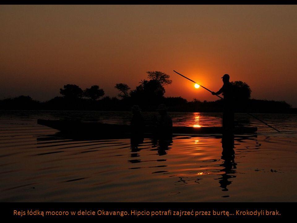 Rejs łódką mocoro w delcie Okavango. Hipcio potrafi zajrzeć przez burtę… Krokodyli brak.