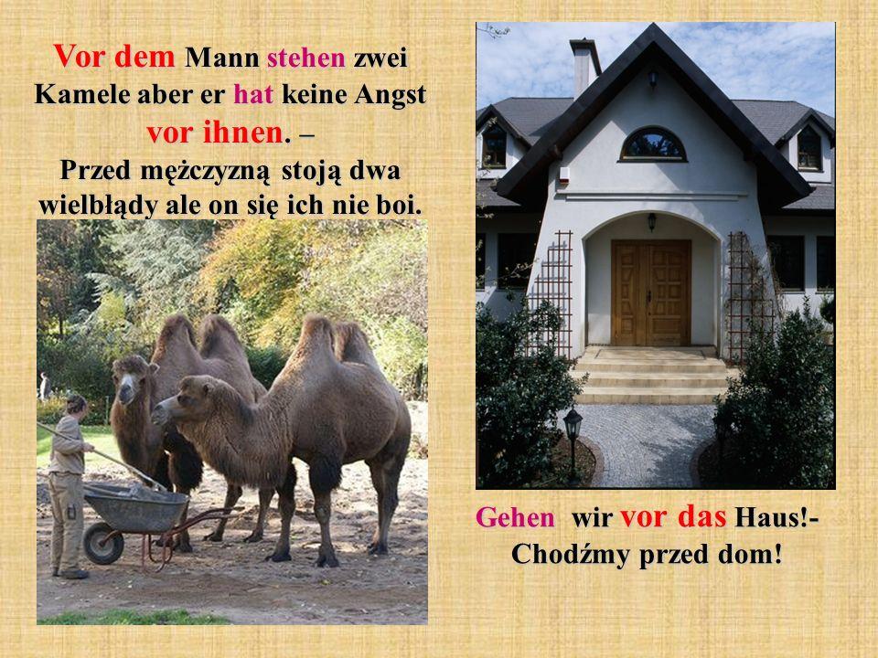 Vor dem Mann stehen zwei Kamele aber er hat keine Angst vor ihnen.