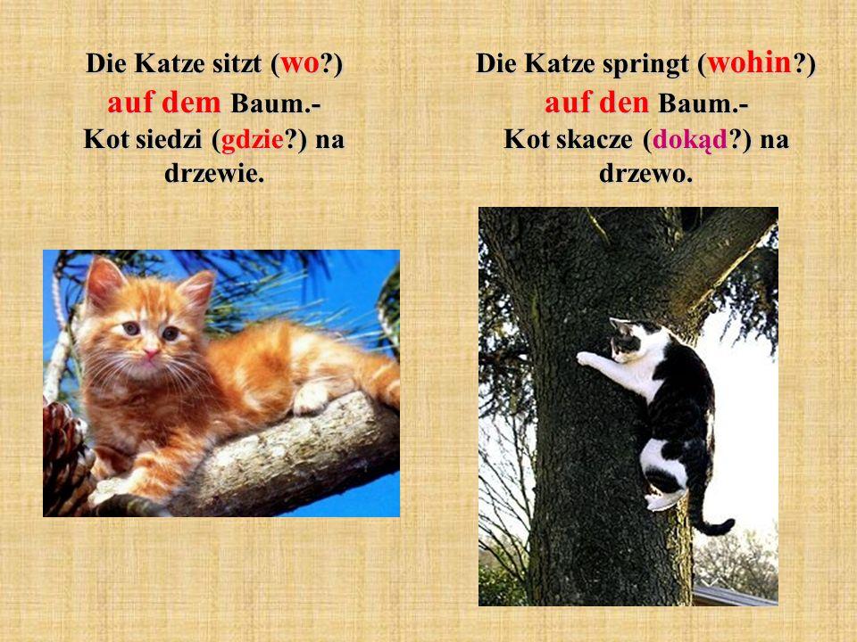 Die Katze springt ( wohin ?) auf den Baum.- Kot skacze (dokąd?) na drzewo.