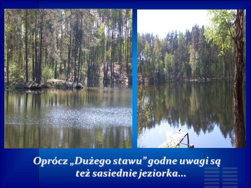 """Oprócz """"Dużego stawu godne uwagi są też sasiednie jeziorka..."""