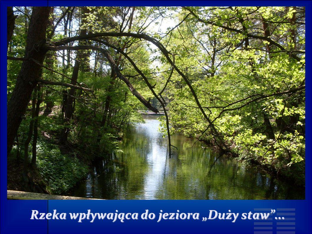 """Rzeka wpływająca do jeziora """"Duży staw ..."""