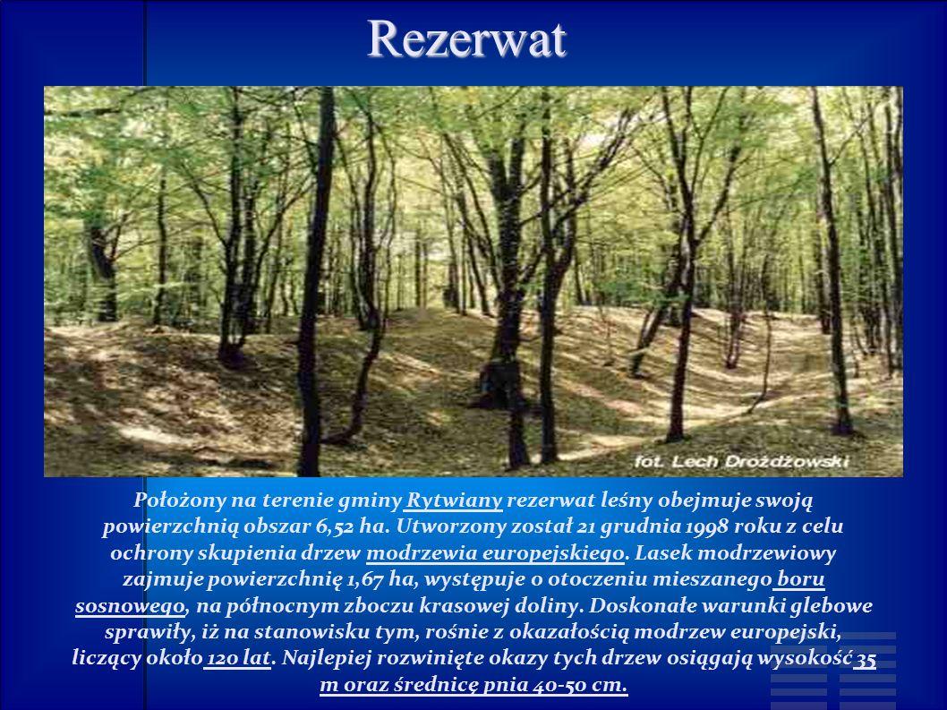 Rezerwat Położony na terenie gminy Rytwiany rezerwat leśny obejmuje swoją powierzchnią obszar 6,52 ha.