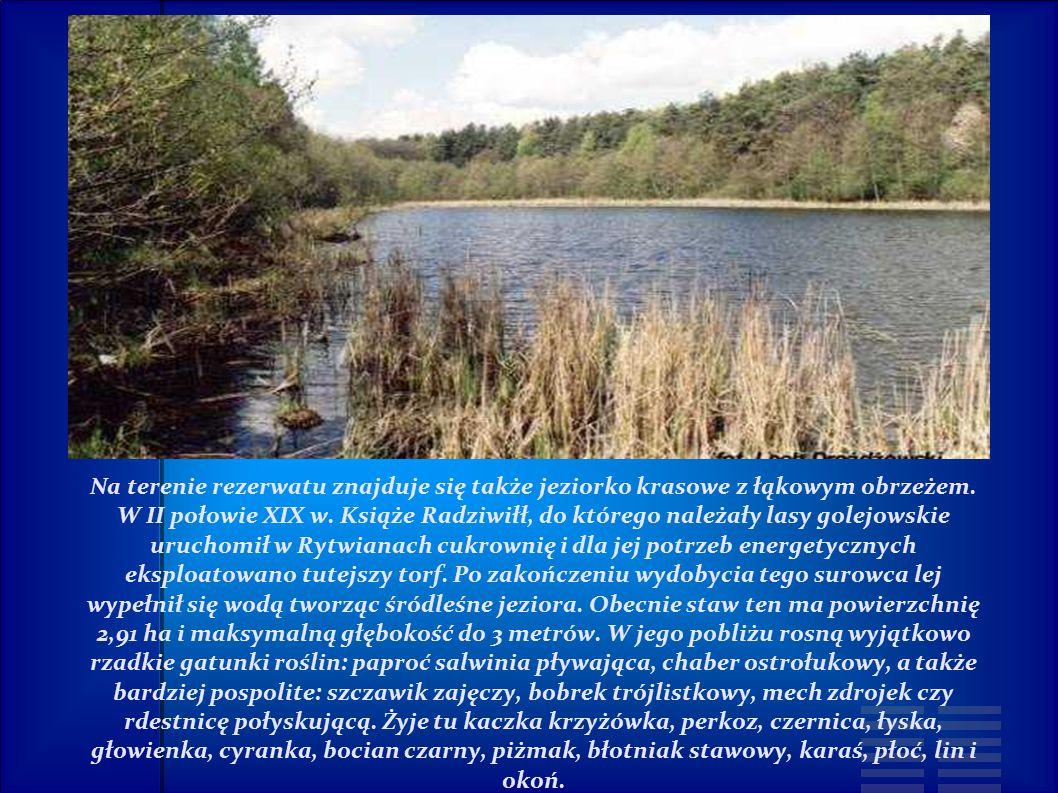 Na terenie rezerwatu znajduje się także jeziorko krasowe z łąkowym obrzeżem.
