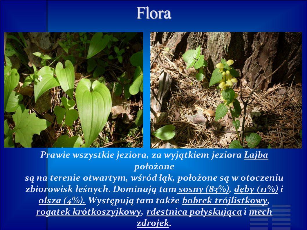 Flora Prawie wszystkie jeziora, za wyjątkiem jeziora Łajba położone są na terenie otwartym, wśród łąk, położone są w otoczeniu zbiorowisk leśnych.